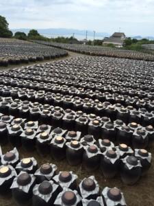 201409壺畑
