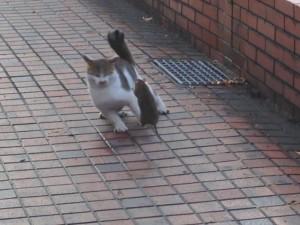 cat_mouse_2