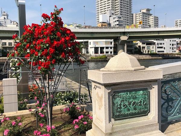 19.05.13 中之島薔薇園6