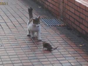 cat_mouse_1