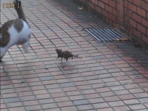 cat_mouse_3